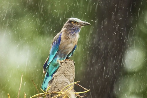 Enjoying the Rains