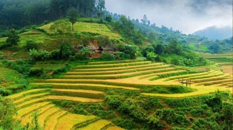 Terraced fields, Vietnam