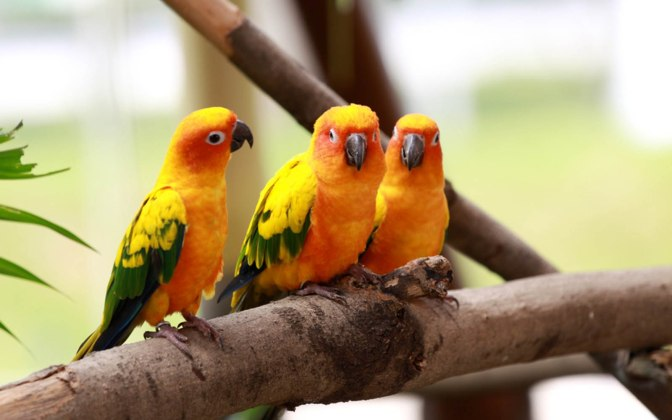 Most Amazing Birds