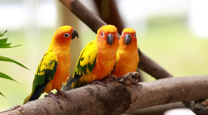 Most Amazing Birds