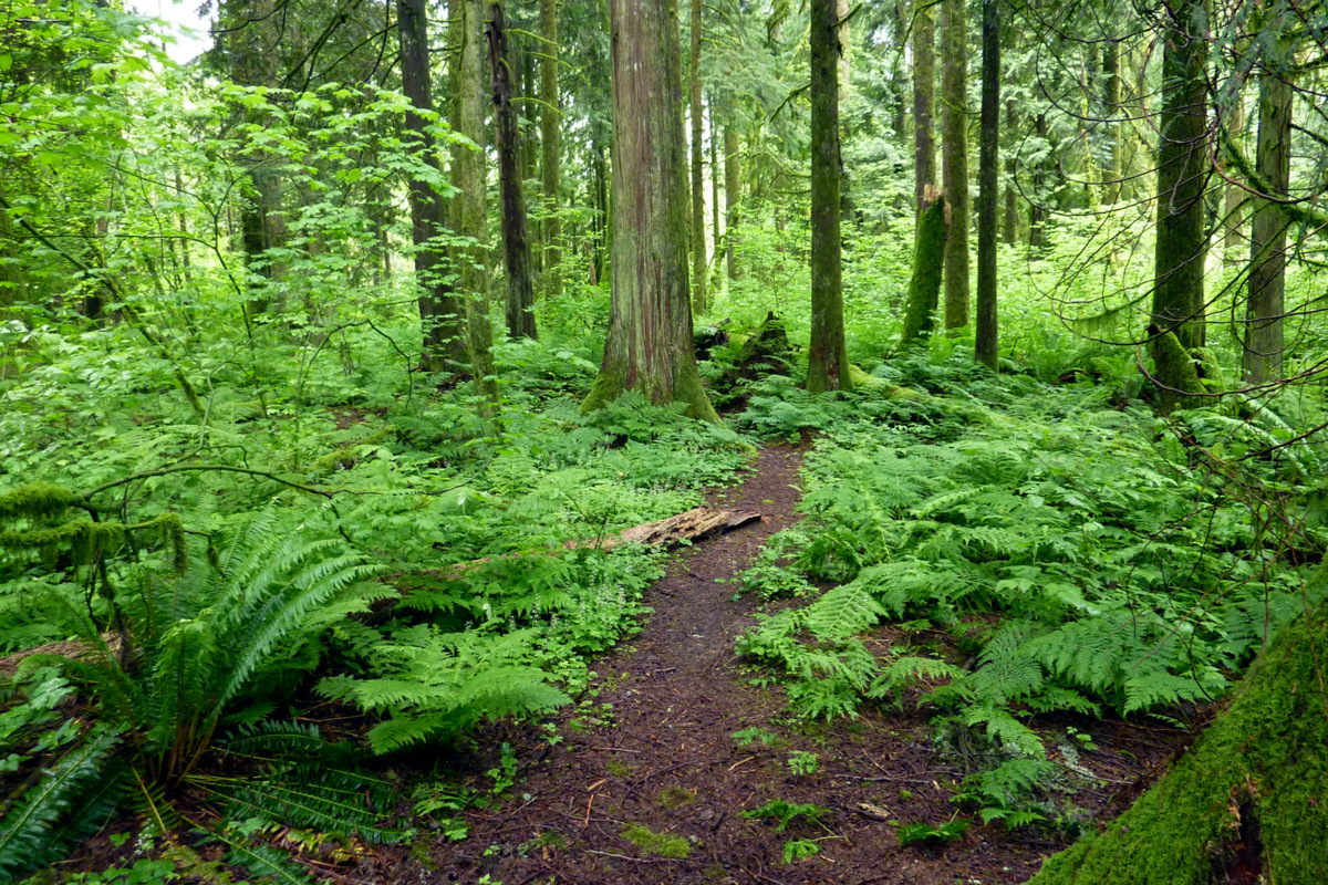 O' Forest the Magic thou Behold! | I Love Travelling and ...