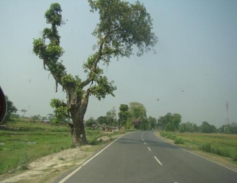 Greenery in Bhagalpur, India