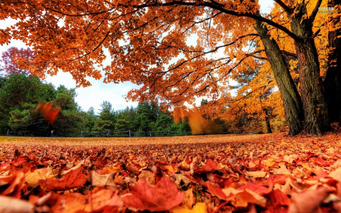 Those beautiful Autumn Days!