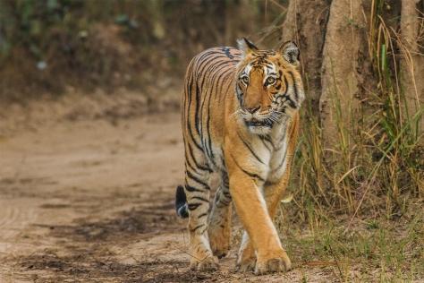 Corbett_Uttarakhand