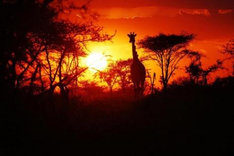 Serengeti-Tanzania-sunset