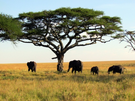 serengeti_national_park_safari