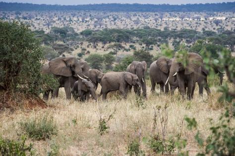 Elephant Capital
