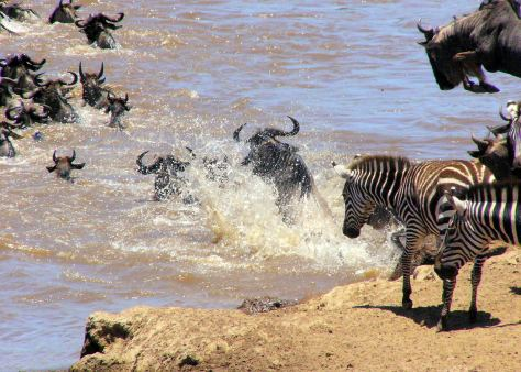 kenya_wildebeest_migration