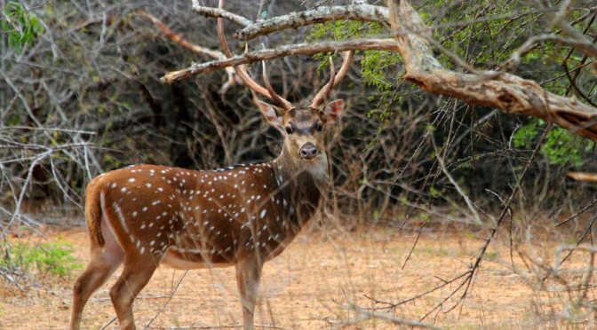 Safari Forests and its Trip!