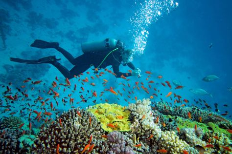 underwater diving in andaman