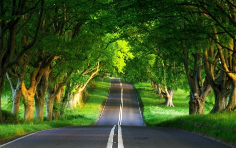 Nature_Green_Road