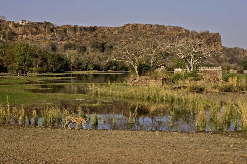Gir forest in Gujarat