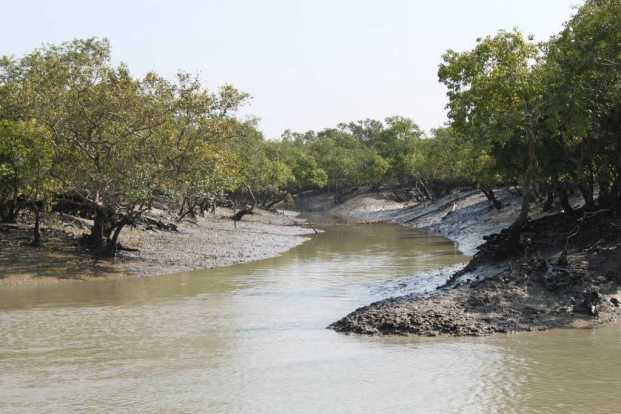 Sundarban forest in West Bengal