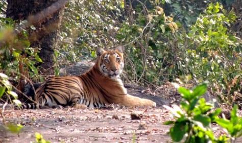 Anamalai Tiger Safari, Tamil Nadu