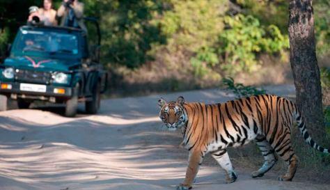 Bandhavgarh Tiger Safari, Madhya Pradesh