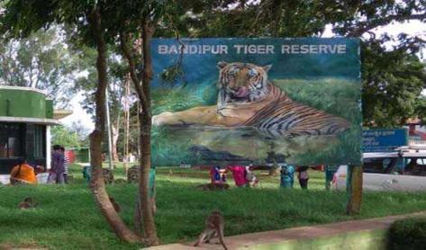 Bandipur Tiger Safari, Karnataka