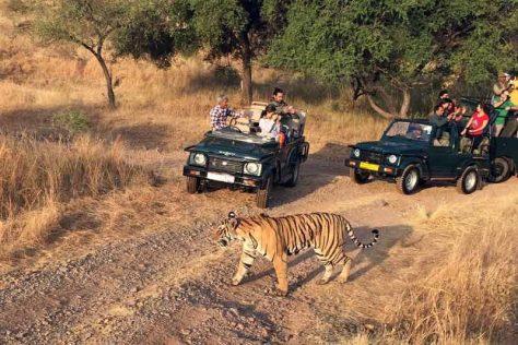 Jim Corbett Tiger Safari, Uttrakhand.jpg