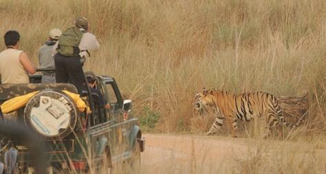 Pench Tiger Safari, Madhya Pradesh