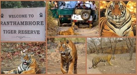 Ranthambore Tiger Safari, Rajasthan