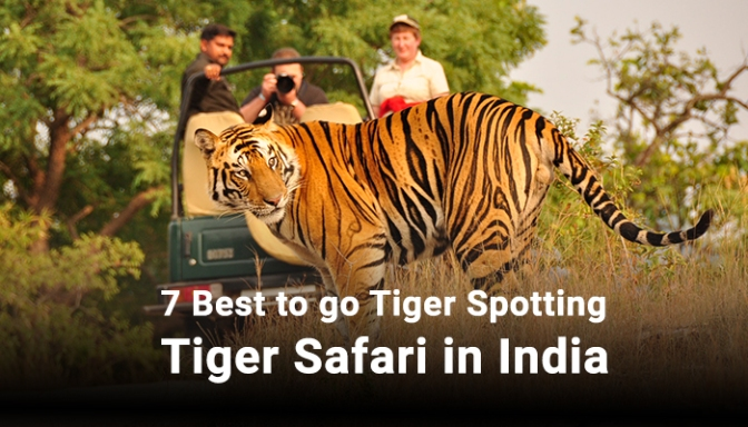 7 Best to go Tiger Spotting Tiger Safari in India
