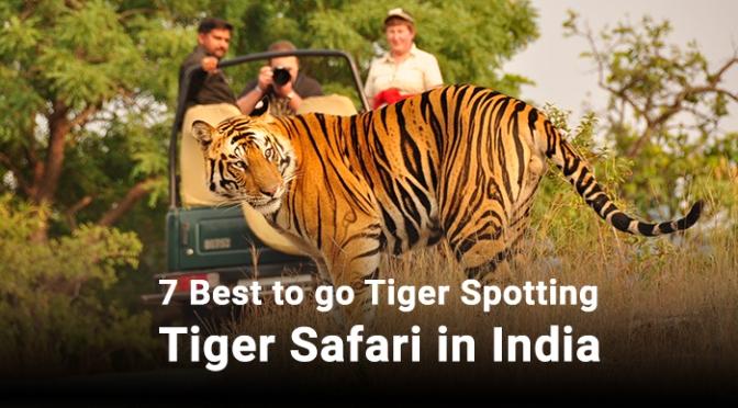 7 Best to go Tiger Spotting Tiger Safari in India